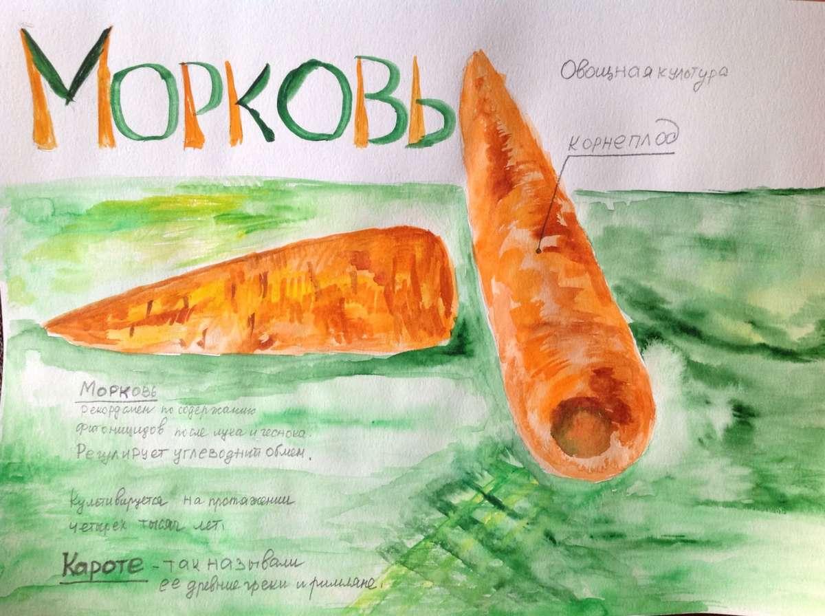 Какие блюда готовить из моркови каждый день?