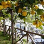 Амальфитанское побережье Италии и самые богатые в Европе плантации лимонов
