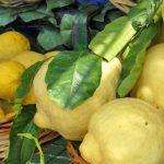 50 фактов про лимоны